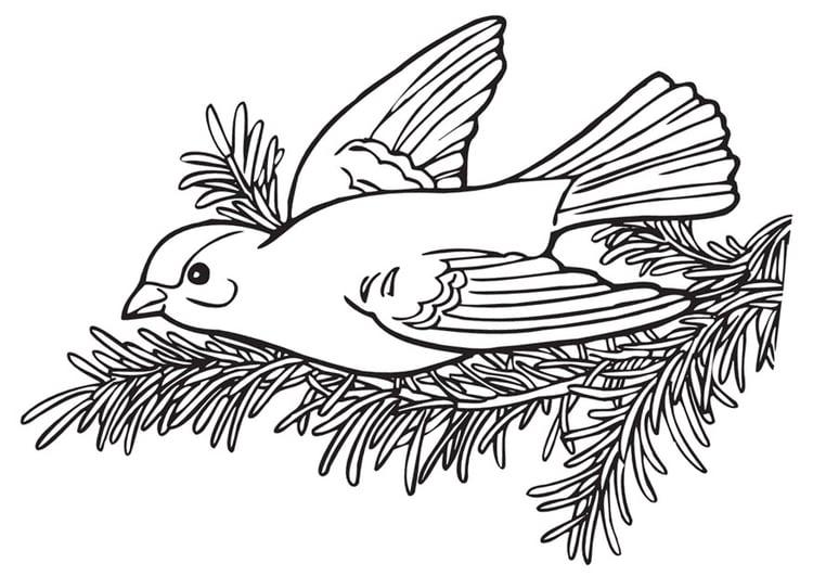 Malvorlage Vogel | Ausmalbild 9976.