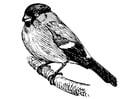 Malvorlage  Vogel - Goldfink
