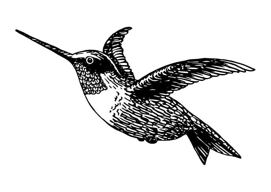Malvorlage Vogel - Kolibri | Ausmalbild 27798.