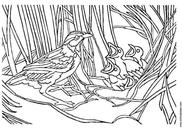 Malvorlage Vogel Mit Nest Kostenlose Ausmalbilder Zum Ausdrucken