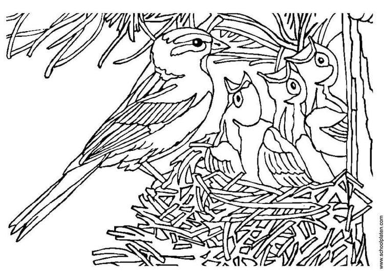 Malvorlage Vogel Mit Nest Ausmalbild 3405 Images
