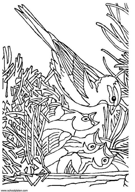 Kleurplaat Volwassenen Malvorlage Vogel Mit Nest Ausmalbild 3405