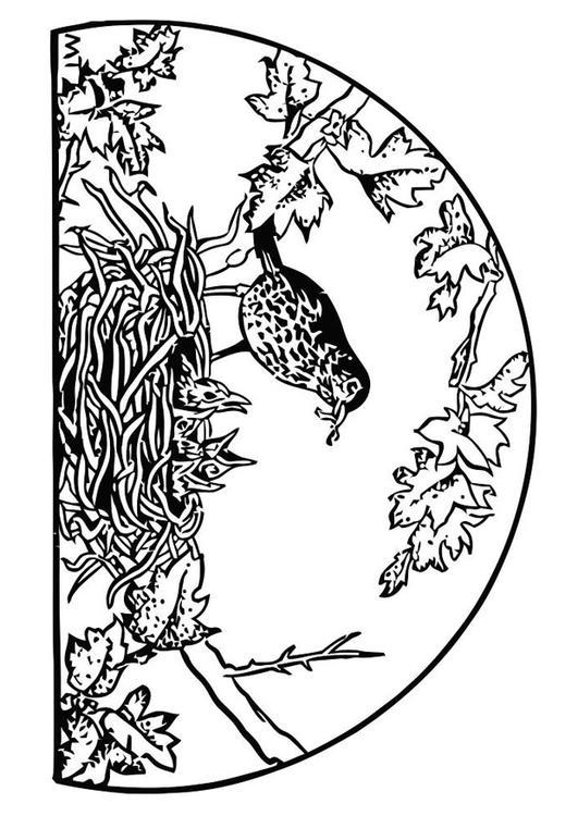 Malvorlage Vogelnest | Ausmalbild 19453.