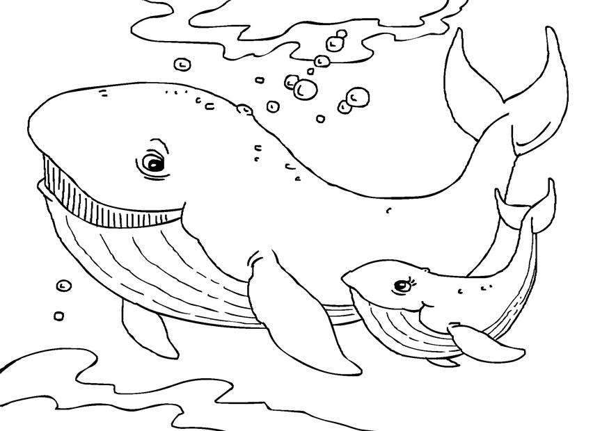 Malvorlage Wale | Ausmalbild 27231.