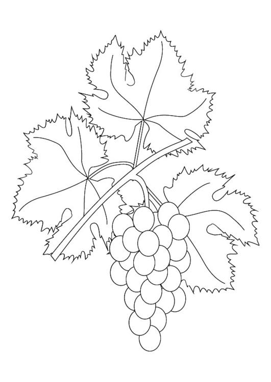 Malvorlage Weinranke mit Trauben | Ausmalbild 9876.