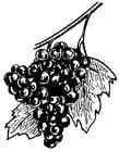 Malvorlage  Weintrauben