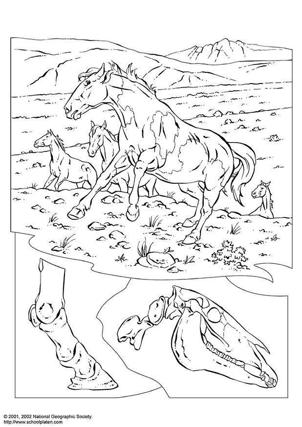 Kleurplaat Wolf Printen Malvorlage Wildpferde Kostenlose Ausmalbilder Zum