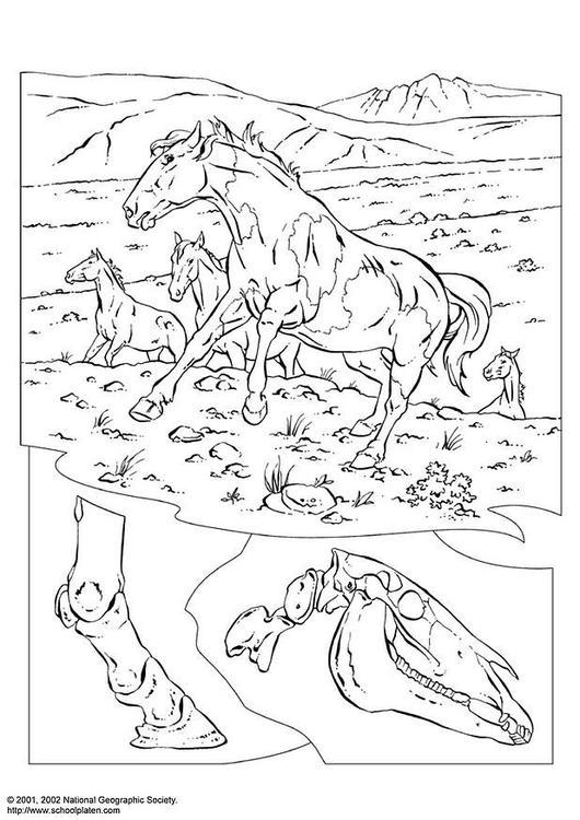 Malvorlage Wildpferde Ausmalbild 3080