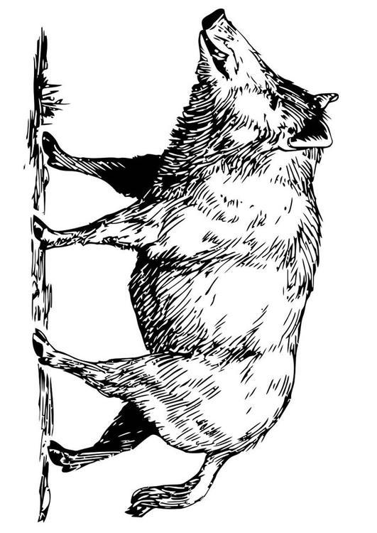 Malvorlage Wildschwein Ausmalbild 19456