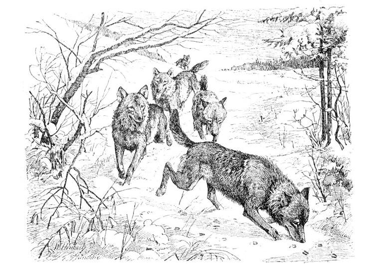 wolf mit jungen malvorlage  coloring and malvorlagan
