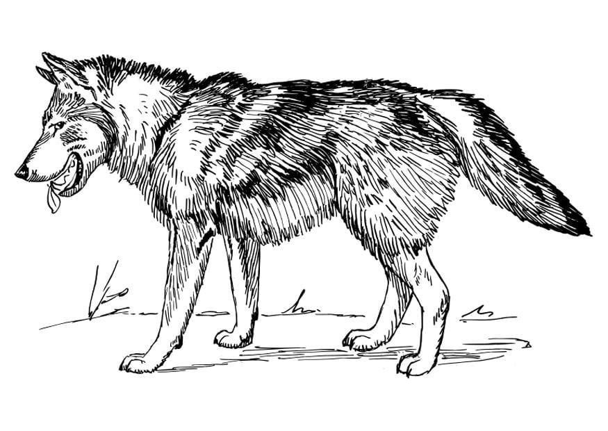 Malvorlage Wolf Ausmalbild 22785