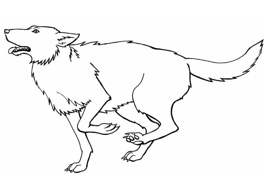 Malvorlage Wolf Ausmalbild 8917