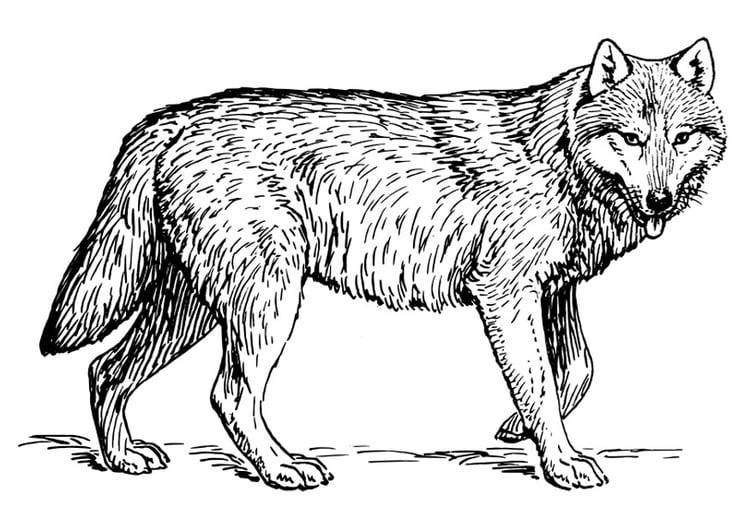 Malvorlage Wolf Ausmalbild 22786