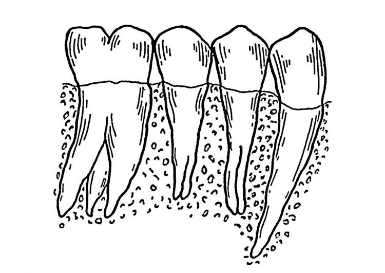Malvorlage Zähne | Ausmalbild 18755.