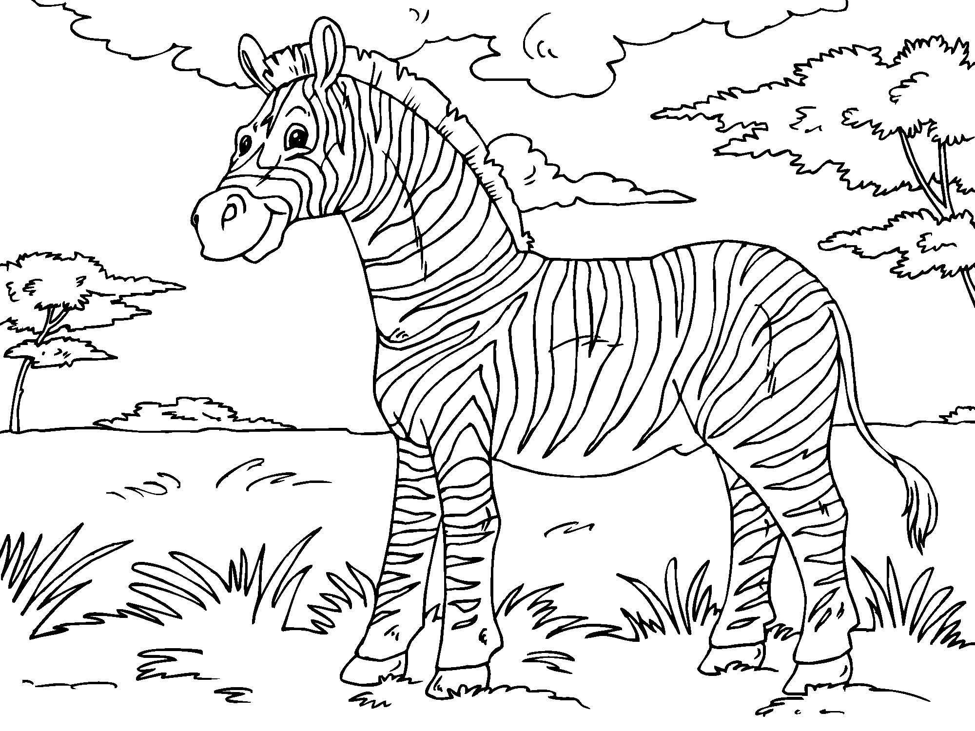 Malvorlage Zebra | Ausmalbild 23013.