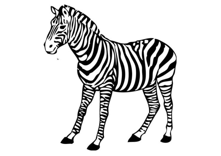 Malvorlage Zebra Ausmalbild 17394 Images