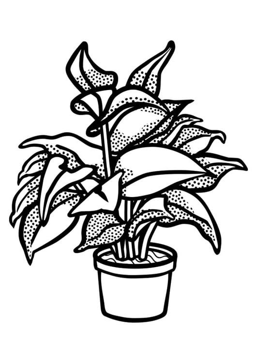 malvorlage zimmerpflanze  coloring and malvorlagan