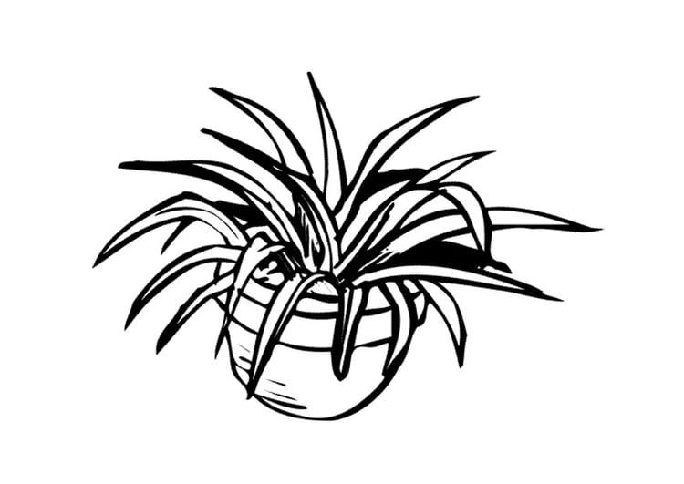 malvorlage zimmerpflanze  kostenlose ausmalbilder zum