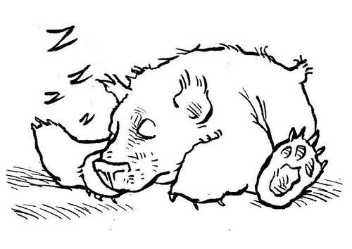 Malvorlage  schlafender Bär